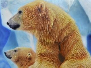 """Работы наших друзей: Иван, г. Алматы """"Белые медведи"""""""